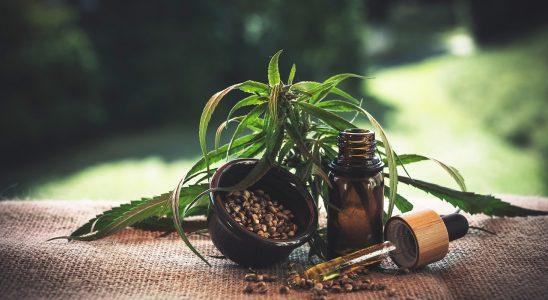huile extraits de chanvre